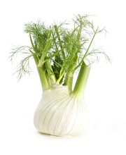 Anise Fennel