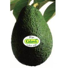 Calavo Brand Avocado