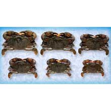Soft Shell Wild Caught Crabs