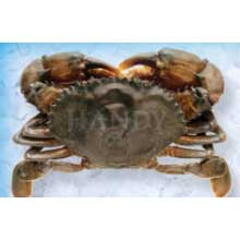 Soft Shell Wild Caught Colossal Crabs