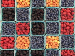 Berries, bees and beer. Images