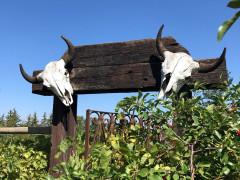 The Saskatoon Farm Images