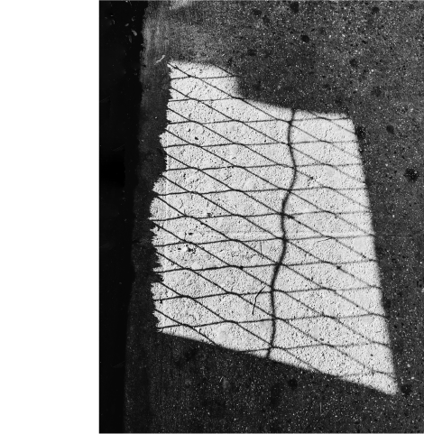Issue 07