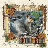Squirrel Grove Kit