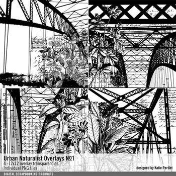 Urban Naturalist Overlays No. 01