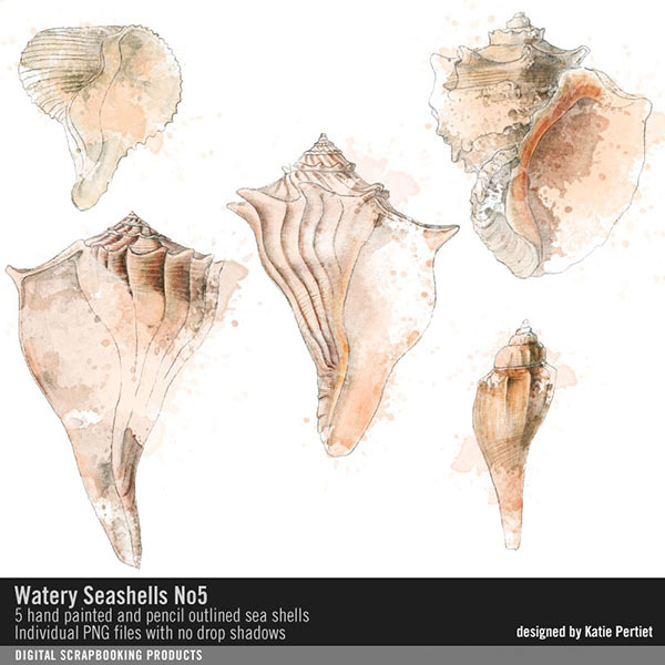 Watery Sea Shells No. 05