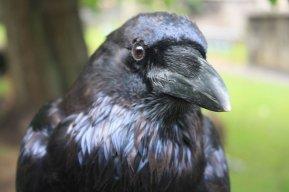 Raven Ravenheart