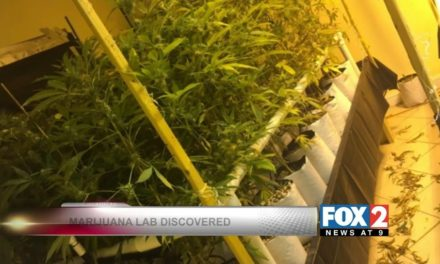 Hydroponic Marijuana Growing Operation Busted in Brownsville