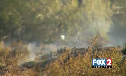 Fires Consumes 20 Acres in Brownsville Area