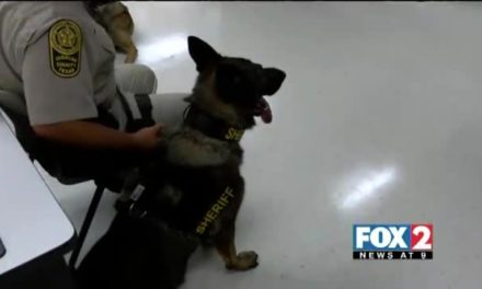 Sheriff's Department Train to Provide First Aid to K9