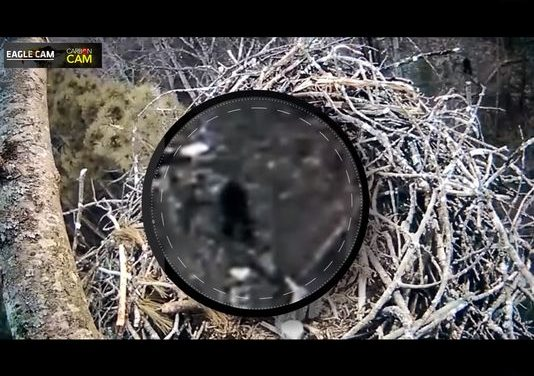 Some claim Bigfoot spotted on Michigan eagle nest camera