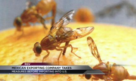 "Valley Counties under Quarantine for ""Mexican Fruit Fly"""