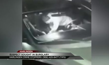 Harlingen Police Search for Car Burglar