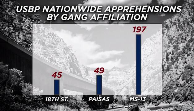 Border Patrol arrest two gang members over the weekend