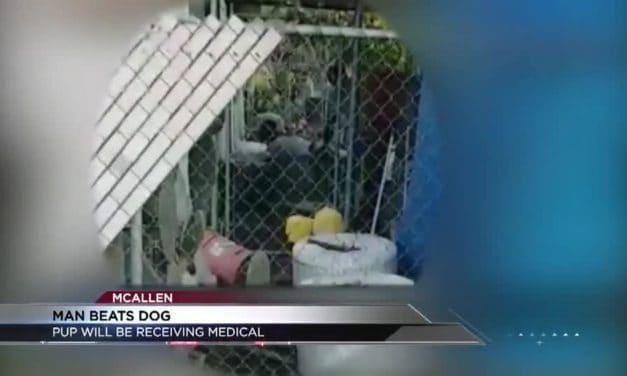 Dog Beaten – Caught On Camera