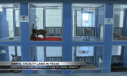 Penalties For Animal Abusers