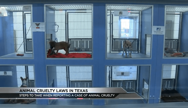 Penalties For Animal Abusers
