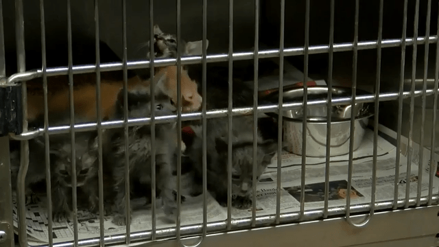 Animal Shelter At Capacity, Issues Code Red