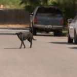 Weslaco Neighbood Seeks Help Over Alleged Dog Invasion
