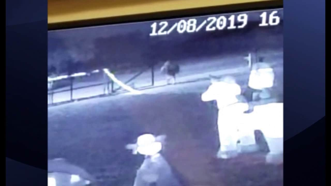 Authorities Search for Christmas Decoration Thief 1