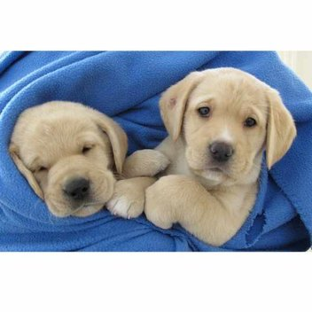 Win a Guide Dogs experience day