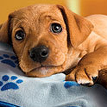 40 free Petplan Blankets to be claimed