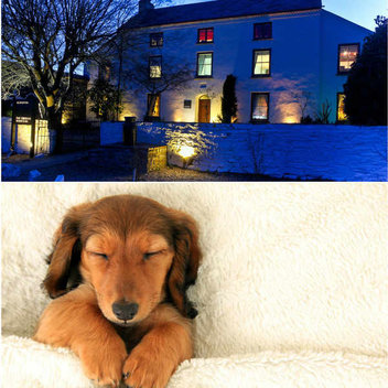 Enjoy a spa getaway with your furry friend