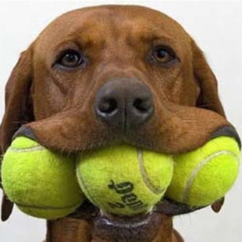 Exchange your old tennis ball for a new one