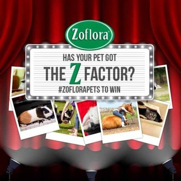 Zoflora goodies for you and your talented pet