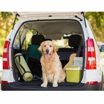 Win 1 of 3 travel kits for your pet from Bob Martin