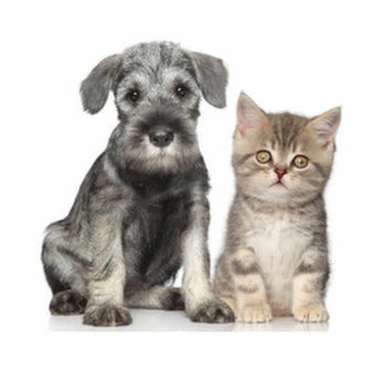Get your free kitten or puppy pack at Natures Menu