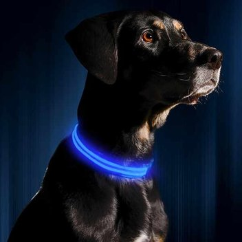Claim a free LED dog collar