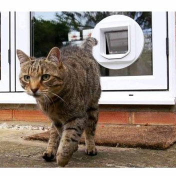 Win a SureFlap Microchip Cat Flap