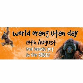 Red heads go free on August 19th to celebrate World Orangutan Day at Twycross Zoo