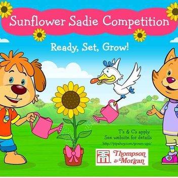 Free Pip Ahoy Sunflower Seeds