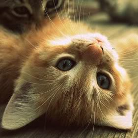 relaxing-cat