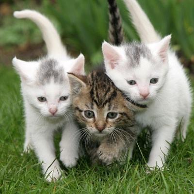 fcc kitties