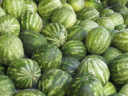 Watermelons (botanical name: Citrullus lanatus) in abundance at outdoor farmers' market in Sarasota, Florida