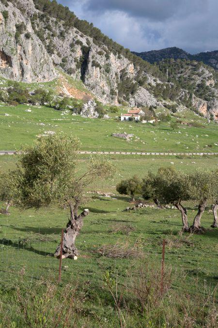 Grazalema National Park; Spain