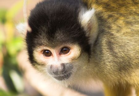 baby monkey's portrait