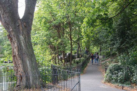Tree in St Stephens Green Park, Dublin; Ireland