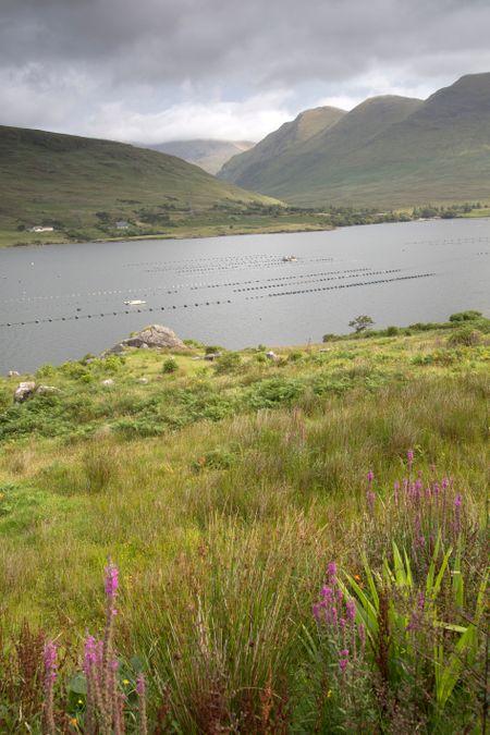Killary Fjord; Connemara National Park; Ireland