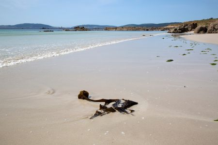 Seaweed at Beach in Galicia Spain