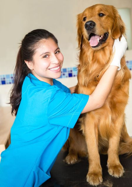 Happy female vet examining a beautiful dog