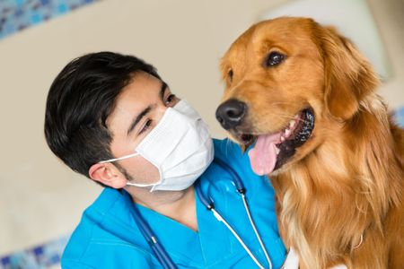 Portrait of a veterinarian checking a beautiful dog