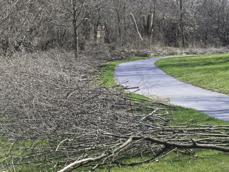 Spring cuttings: Piles of pruned tree branches arranged for pickup along curved path by woods in a public park, northern Illinois
