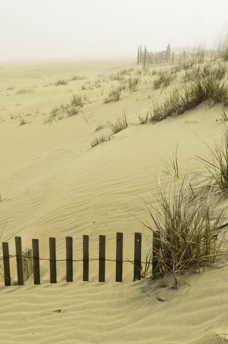 Coastal dune landscape on a foggy day south of Virginia Beach, Virginia