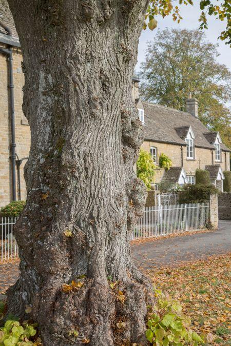 Tree Trunk; Lower Slaughter Village; Cheltenham; England; UK