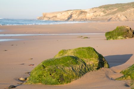 Cliff and Beach with Green Seaweed Rock; Portugal