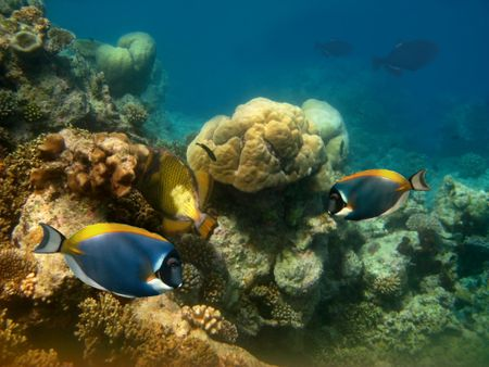 fish and other underwater marine life in vibrant colours